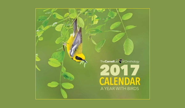 FREE 2017 Cornell Lab of Ornithology Calendar (US)