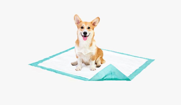 FREE Puppy Pad Sample