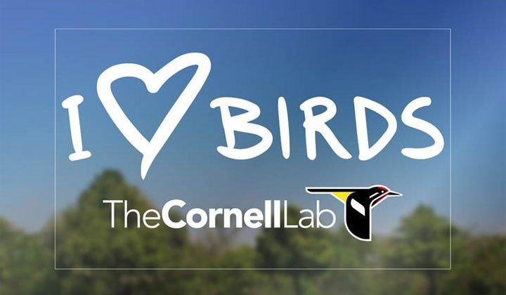FREE I ♡ Birds Decal (US Only)