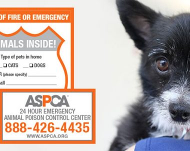 FREE Pet Safety Pack from The ASPCA (US)