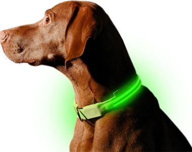 FREE L.E.D. Dog Collar (US Only)