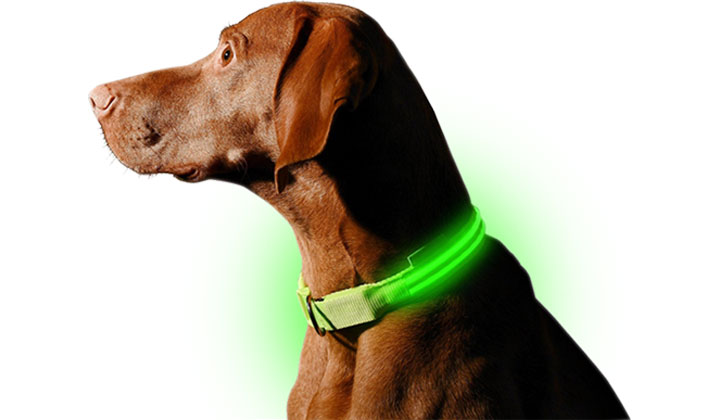 FREE L.E.D. Dog Collar