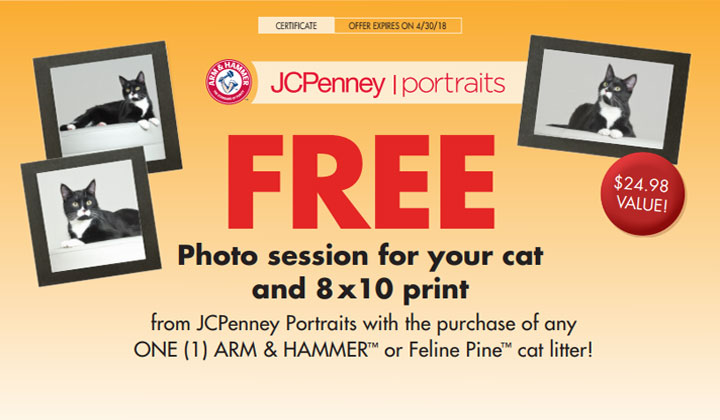 FREE Photo Session For Your Cat